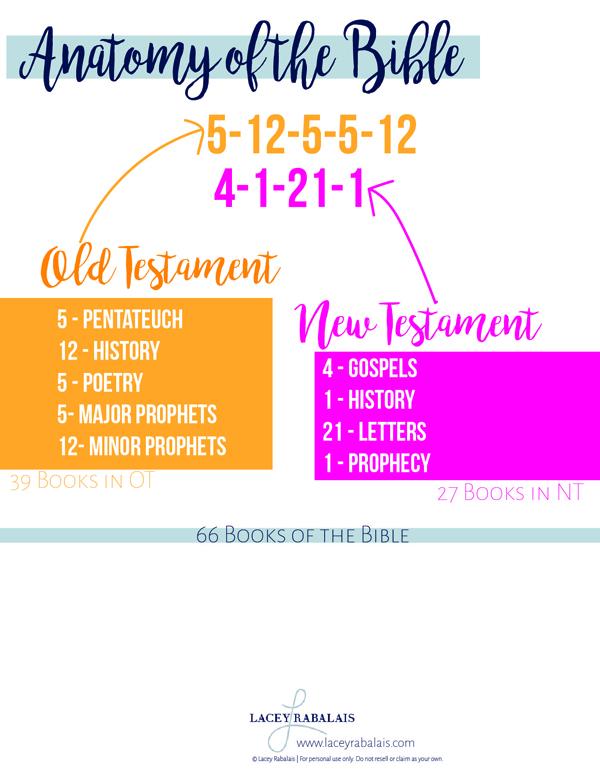 Anatomy of the Bible | Lacey Rabalais