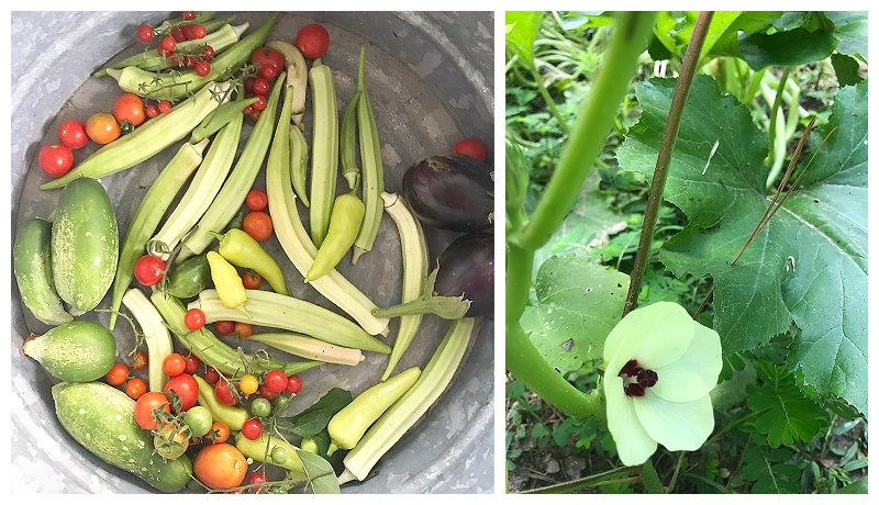 The Rab Farm // Summer Garden Harvest